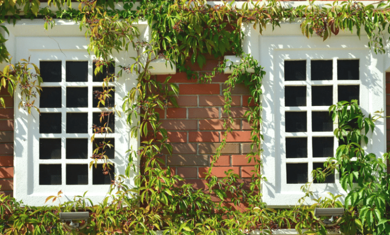Sash & Case Windows Direct